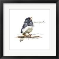 Framed Songbird Study VI
