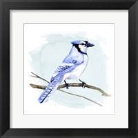Framed Coastal Blue Jay I