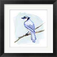 Framed Coastal Blue Jay II