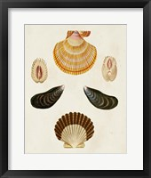 Framed Knorr Shells I