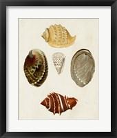 Framed Knorr Shells IV