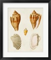 Framed Knorr Shells VII