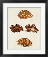 Framed Knorr Shells VIII