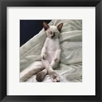 Framed Cat Yoga II
