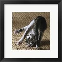 Framed Cat Yoga IV