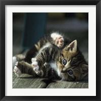 Framed Cat Yoga V