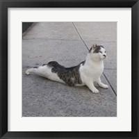 Framed Cat Yoga VI