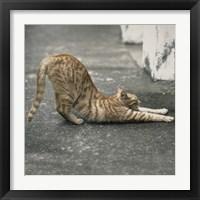 Framed Cat Yoga VIII