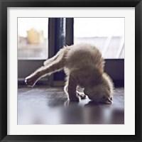 Framed Cat Yoga X