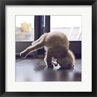 Framed Cat Yoga X