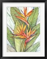 Framed Tropical Botanical Paradise I