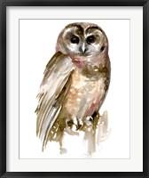 Framed Watercolor Owl II