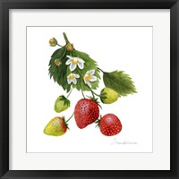 Framed Strawberry Study I