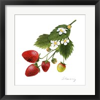 Framed Strawberry Study II