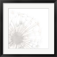 Framed Dandelion Whisper I