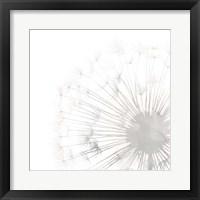 Framed Dandelion Whisper II
