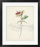 Watercolor Botanical Sketches II Framed Print