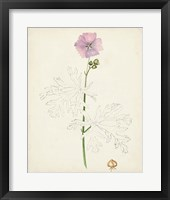 Watercolor Botanical Sketches III Framed Print