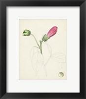 Framed Watercolor Botanical Sketches IV