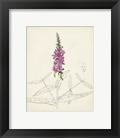 Framed Watercolor Botanical Sketches V
