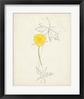Watercolor Botanical Sketches VII Framed Print