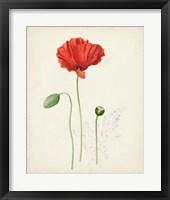 Framed Watercolor Botanical Sketches IX