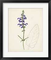 Watercolor Botanical Sketches X Framed Print