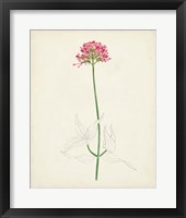 Framed Watercolor Botanical Sketches XI