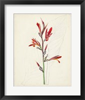 Watercolor Botanical Sketches XII Framed Print