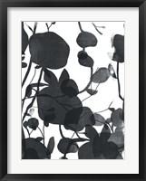 Framed Monoflora II