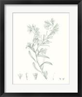 Framed Botanical Study in Sage II