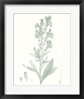 Framed Botanical Study in Sage III