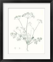 Framed Botanical Study in Sage IV