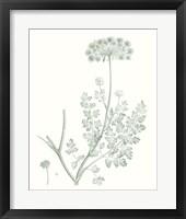 Framed Botanical Study in Sage V
