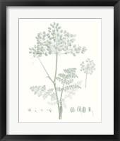 Framed Botanical Study in Sage VI