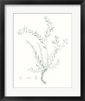Framed Botanical Study in Sage VII
