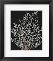 Framed Gunni Eucalyptus I