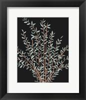 Framed Gunni Eucalyptus II