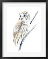 Framed Arctic Owl I