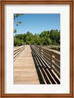 Framed Alabama, Theodore Bayou Boardwalk of the Bellingrath gardens