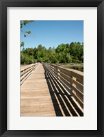 Framed Alabama, Theodore Bayou Boardwalk of the Bellingrath gardens