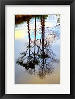 Framed Reflections in a Stream, Ward Ware Nature Park, Gulf Shores Alabama