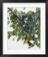 Framed Blueberries