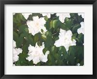 Framed Gardenias