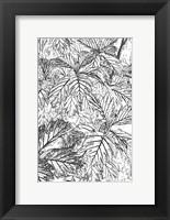 Framed Botanical BW I