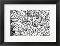 Framed Botanical BW II