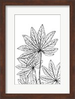 Framed Botanical BW III