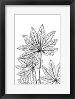 Framed Botanical BW III