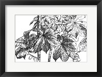 Framed Botanical BW IV