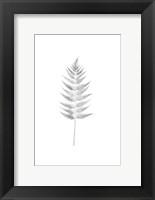 Framed Palm I